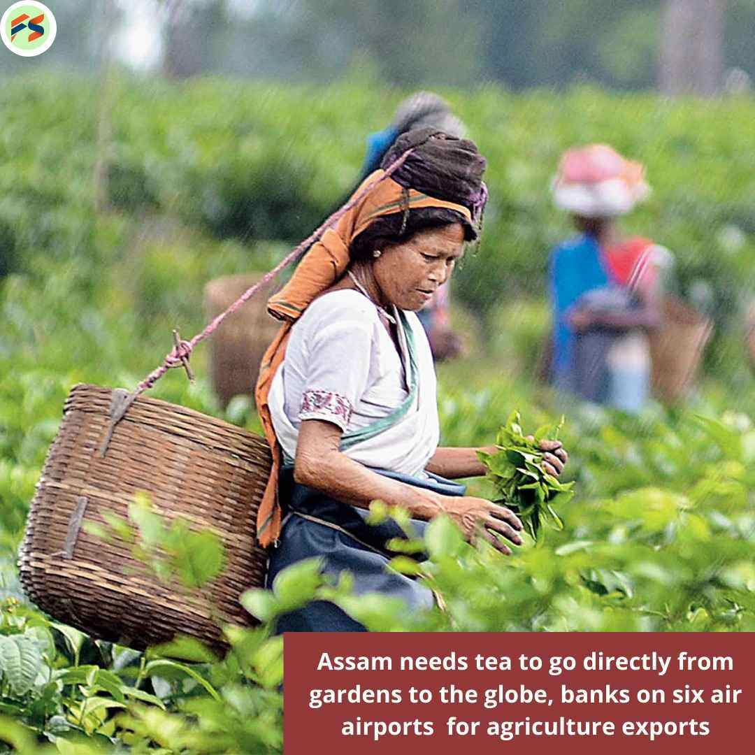 Assam Needs Tea To go Directly from Gardens to the Globe, banks on six air airports  for agriculture exports